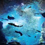 新江ノ島水族館でわくわくドキドキ大冒険を味わおう!