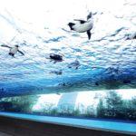 東京都内でファミリーにおすすめの水族館6選