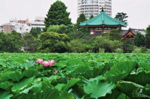 東京都内で子供が楽しめるおすすめの公園6選