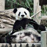 関東の子連れで楽しめるおすすめ動物園5選