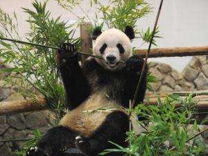 関西で家族におすすめの個性派動物園5選