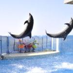 水族館に江ノ電、日本最大級のジオラマまで!親子で遊べる「藤沢」にいこう