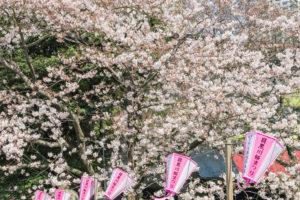 子供といっしょに楽しめる!東京都のお花見おすすめスポット5選