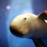 瀬戸内の海と生き物が丸わかり!宮島水族館