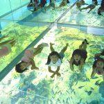 ガラス張りの水面に寝転んで魚を観察?! ふれあい体験もいっぱいの「越前松島水族館」
