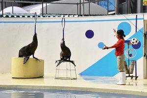 伊豆・三津シーパラダイスの魅力を紹介!イルカやアザラシと出会える