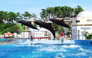 見てふれて楽しんで学べる!越前松島水族館の魅力を紹介