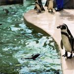 新潟市水族館 マリンピア日本海は、海と人との物語を紡ぐ新しい水族館