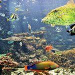串本海中公園で海中散歩を体験!巨大回遊魚も大迫力で泳ぎ回る