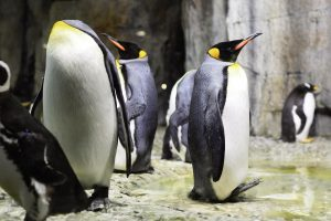 豊かな海の魅力を体感できる仙台うみの杜水族館を楽しもう!