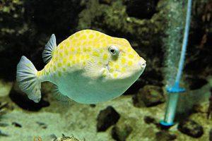 下関市立しものせき水族館 海響館は下関の海にこだわったユニークな水族館