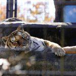自然あふれるいしかわ動物園で動物本来の姿を観察!