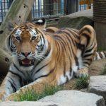 茶臼山動物園の魅力を紹介!80種以上の動物たちと出会える