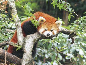 動物との距離が近いアットホームな池田動物園