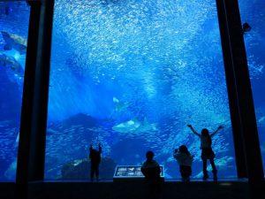 九州の海を再現!マリンワールド海の中道の魅力を紹介
