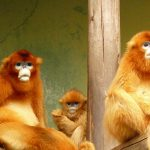 熊本市動植物園で見る・さわる  ・遊ぶ!遊園地ゾーンは乗り物がいっぱい