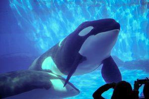名古屋港水族館の見所を紹介!世界の海の生き物に会える楽しい水族館