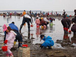 北海道でアサリの潮干狩り&シジミ採り!おすすめスポットは?