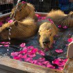 須坂市動物園、人気はアカカンガルーのイッチ、ふれあいハウス、イベントなど