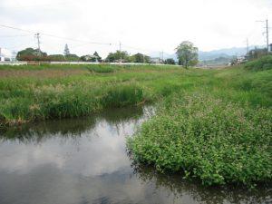 福岡県のホタル観賞・ホタル祭り2019(北九州、東峰村、八女など)
