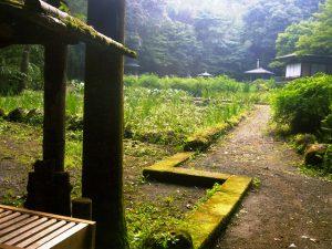 横浜・秦野・箱根・湯河原など…神奈川県のホタル観賞・ホタル祭り2019