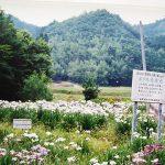 7月中旬~下旬に那須で毎日観賞会!栃木県のホタル観賞・ホタル祭り