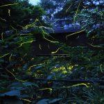 ホタル祭りも満載!東海(静岡・愛知・三重)のホタル観賞スポット2019