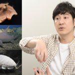 ココリコ田中さんに聞く(2) かわいい深海魚5選&カッコいい深海魚5選