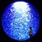 東北のおすすめ水族館7選!クラゲの世界やふれあい・体験が大人気