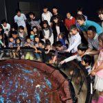 北陸のおすすめ水族館7選!豊富なふれあい体験とジンベエザメが人気
