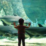 東海のおすすめ水族館21選!海獣と大接近、巨大淡水魚など迫力