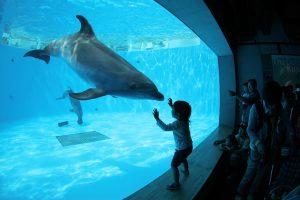 九州のおすすめ水族館13選!イルカのショーやふれあいが充実