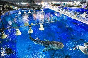 沖縄のおすすめ水族館!沖縄美ら海水族館や那覇近くの新水族館など