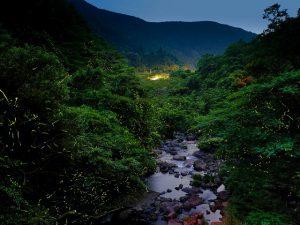 ホタル祭りも!九州(佐賀・大分・鹿児島…)のホタル観賞スポット2019