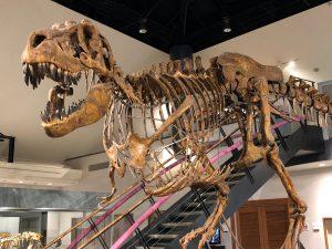 恐竜が迫力の博物館11選!全身骨格や化石発掘などの体験教室に注目