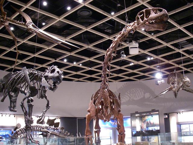 エドモントサウルスなど全身骨格標本/豊橋市自然史博物館(愛知県/豊橋市)