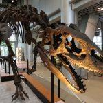 【東北】恐竜の博物館・公園6選!日本で最初に発見されたモシリュウなど