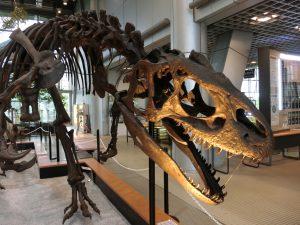 東北の恐竜の博物館・公園6選!日本で最初に発見されたモシリュウなど