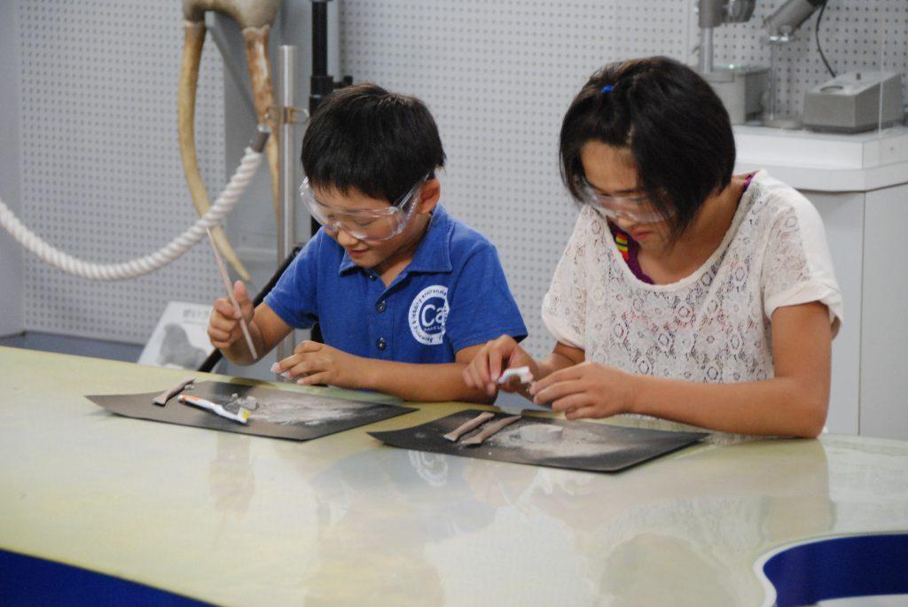 化石クリーニング体験/東海大学・自然史博物館(静岡県/静岡市)