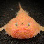 深海魚&深海生物がいる関東近郊の水族館5選!シーラカンスの冷凍標本も