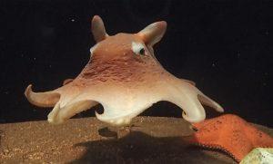 ダイオウグソクムシなど、深海魚&深海生物がいる全国のおすすめ水族館10選