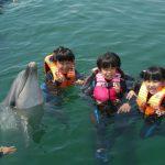 イルカと泳ぐ体験スポット11選!ドルフィンスイムでイルカとふれあい