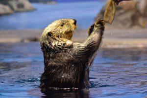 ラッコの給餌タイムは必見!「新潟市水族館マリンピア日本海」で海中散歩