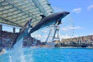 全国のイルカショー&パフォーマンスがあるおすすめ水族館32選