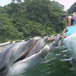 関東近郊のエサやり体験ができる水族館10選!イルカ・ウミガメ・エイなど