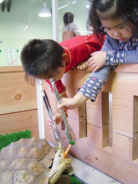 トングでリクガメにエサやり体験/越前松島水族館(福井県/坂井市)