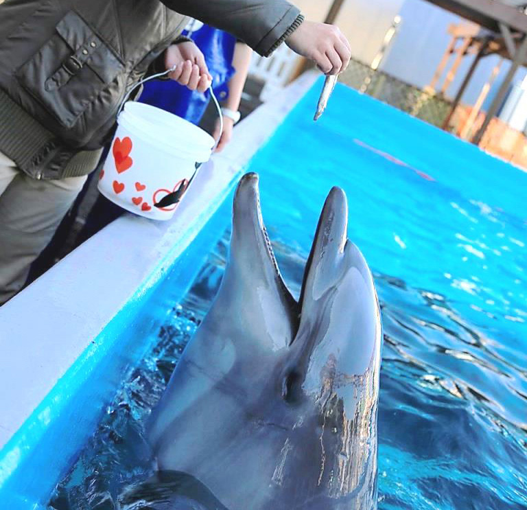 エサやり体験でイルカにエサをあげる様子/神戸市立須磨海浜水族園(兵庫県)