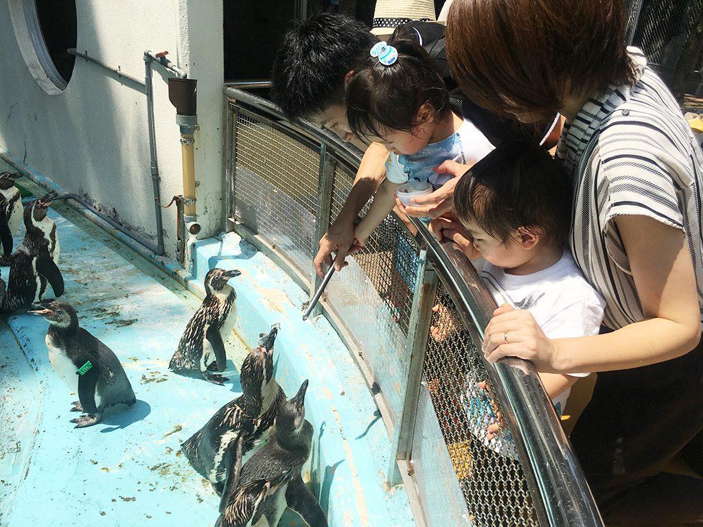 トングを使ってペンギンにエサやり体験/桂浜水族館(高知県/高知市)