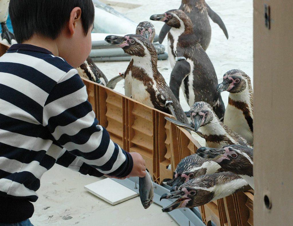 ペンギン餌やり体験/志摩マリンランド(三重県)