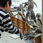 全国のエサやり体験ができる水族館29選!ペンギンやイルカに大接近